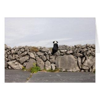 Persiga sentarse en una pared de piedra irlandesa  tarjeta de felicitación