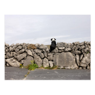 Persiga sentarse en una pared de piedra irlandesa postal