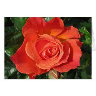 Persimmon Rose Card