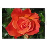 Persimmon Rose Stationery Note Card