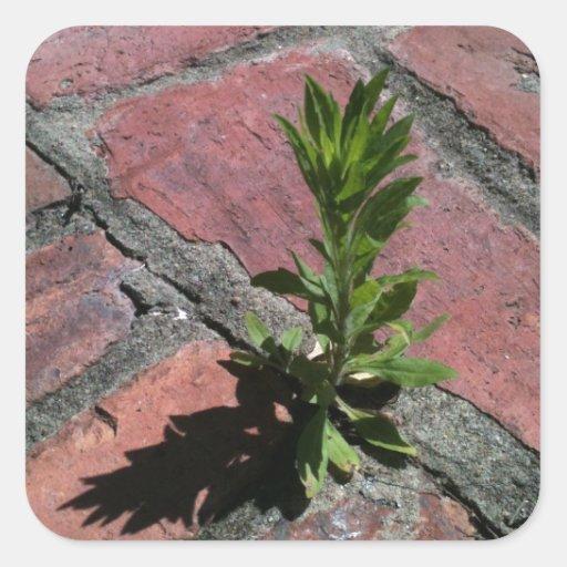 Persistence - plant growing through bricks stickers