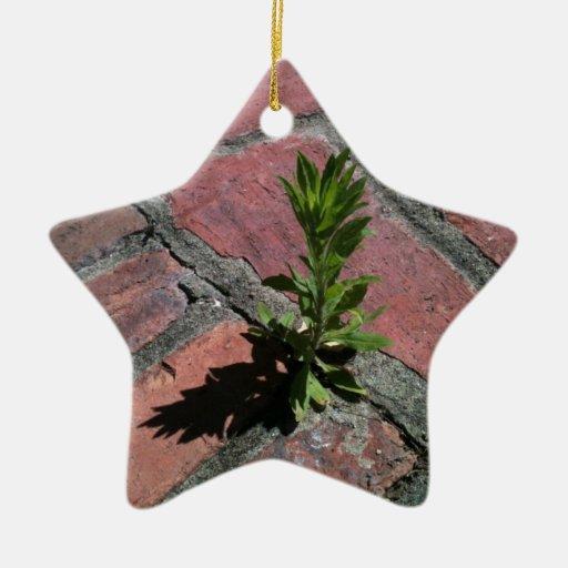 Persistencia - planta que crece a través de ladril ornamentos de navidad