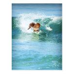 Persona que practica surf de la ardilla en el mar postal