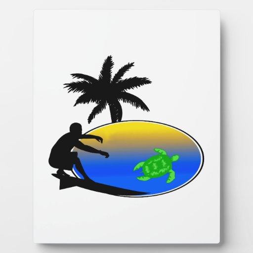 Persona que practica surf de la tortuga de mar placas para mostrar