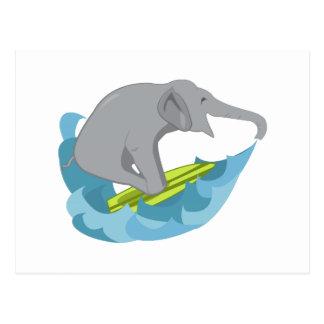 Persona que practica surf del elefante postal