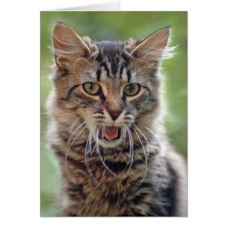 Personalizable de bostezo del gato de Tabby Tarjeta De Felicitación