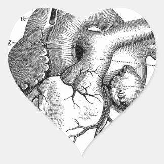 Personalizable de la anatomía el | del corazón del pegatina en forma de corazón