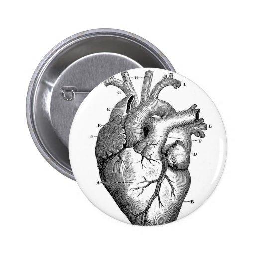 Personalizable de la anatomía el | del corazón del pin