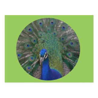 Personalizable de la postal del pavo real