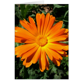 Personalizable del diseño de la margarita anaranja tarjeta de felicitación