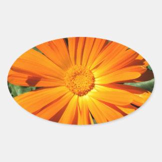 Personalizable del diseño de la margarita calcomanías ovales