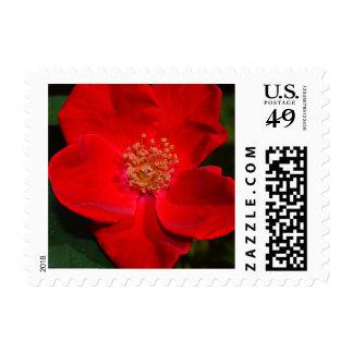 Personalizable del rosa rojo 4 sello postal