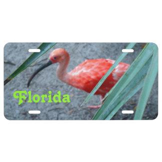 Personalizado tímido de Ibis del escarlata Placa De Matrícula