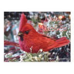 Personalizar de la postal de Redbird del navidad