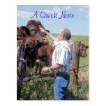 Personalizar de Pinzgauer Bull y de las vacas Postales
