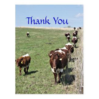 Personalizar en blanco de la postal del ganado
