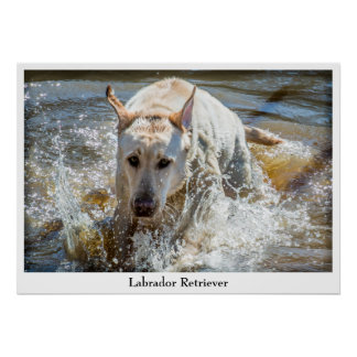 Personalize:  Yellow Labrador Pet Photography Poster