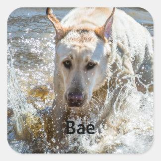 Personalize:  Yellow Labrador Photo Framed Square Sticker