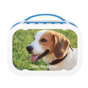 beagle lunch boxes zazzle