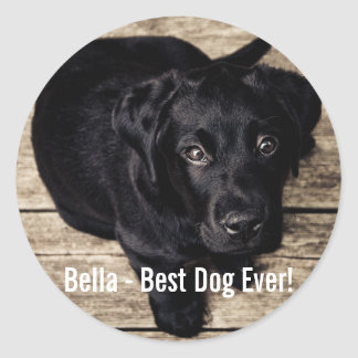 Personalized Black Lab Dog Photo and Dog Name Classic Round Sticker