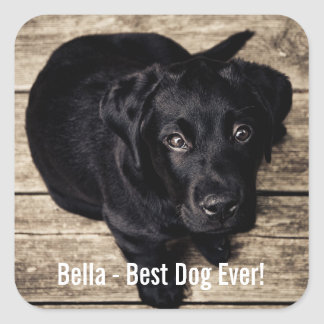Personalized Black Lab Dog Photo and Dog Name Square Sticker