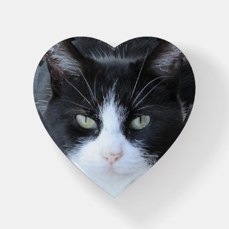 Personalized Cat Photo Paper Weight