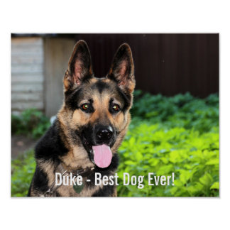 Personalized German Shepherd Dog Photo, Dog Name Poster