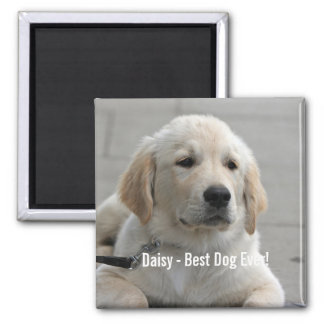 Personalized Golden Retriever Dog Photo and Name 2 Inch Square Magnet