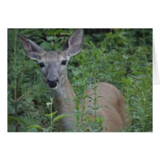 Personalized Greeting Card - Curious White-Tail