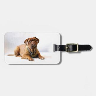 Personalized Mastiff / Dog Photo Luggage Tag