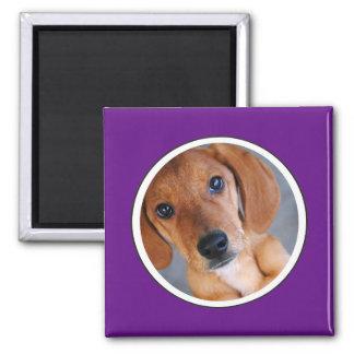 Personalized Pet Photo Purple Frame Magnet