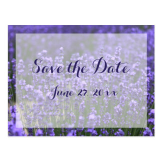 Personalized Purple Lavender Save The Dates Postcard