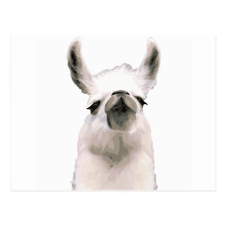 Personalized Snooty Snobby Llama Postcard