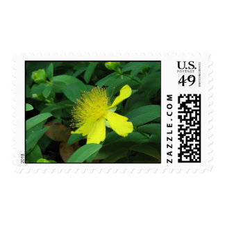 Personalized Yellow Flower US Postage Stamp