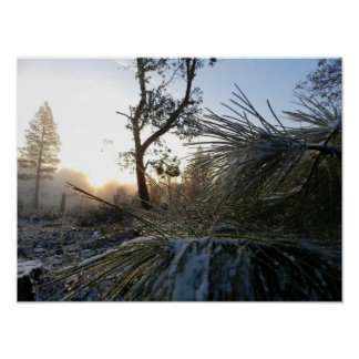 Perspectiva del pino ponderosa de la nieve posters