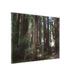 Perspective of the redwoods canvas print