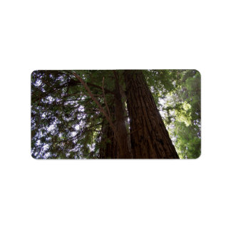 Perspective of the redwoods label
