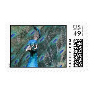 Pert Peacock Stamp