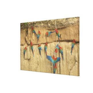 Peru, Amazon River Basin, Madre de Dios Gallery Wrapped Canvas