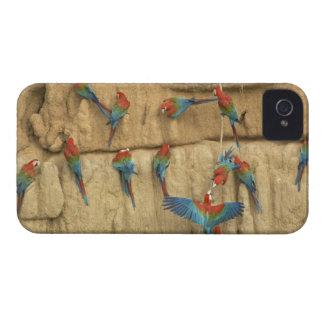 Peru, Amazon River Basin, Madre de Dios iPhone 4 Covers