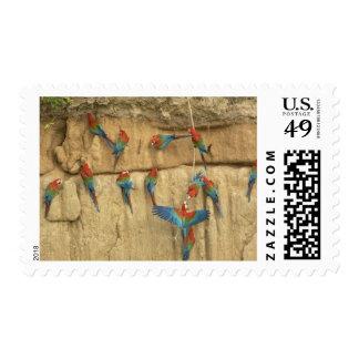 Peru, Amazon River Basin, Madre de Dios Stamp