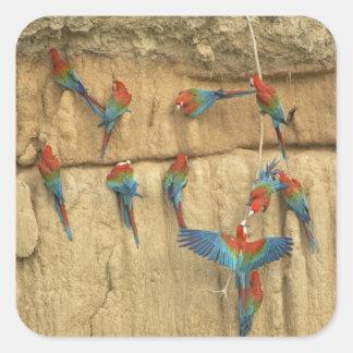 Peru, Amazon River Basin, Madre de Dios Square Sticker