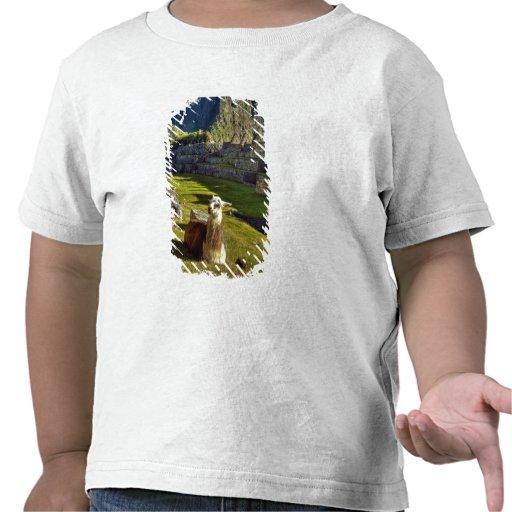 Peru, Andes, Andes Mountains, Machu Picchu, 2 T-shirt