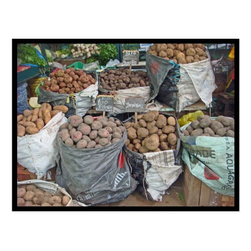 Peru-Land of Potatoes Postcard