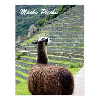 peru llama behind postcard
