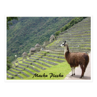 peru llama border postcard