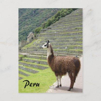 peru llama post card by cardart