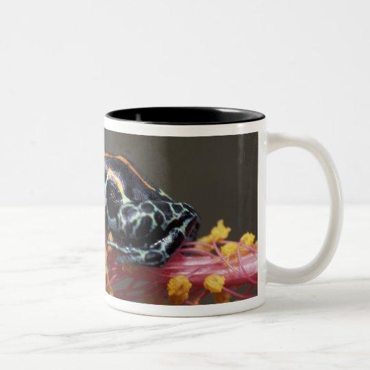 Peru, Peruvian Rain Forest. Poison Arrow Frog Two-Tone Coffee Mug