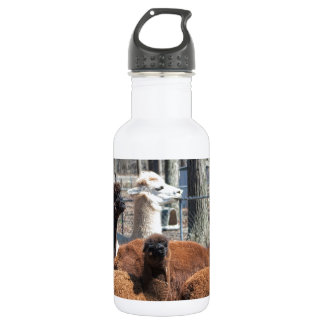 Peruvian Alpaca Family - Vicugna pacos Water Bottle