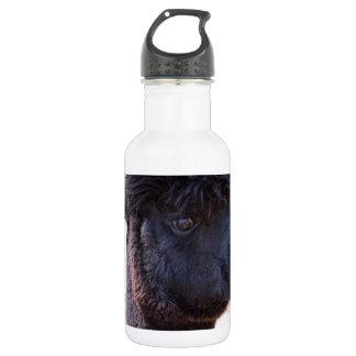 Peruvian Alpaca With Crazy Hair 2 Stainless Steel Water Bottle